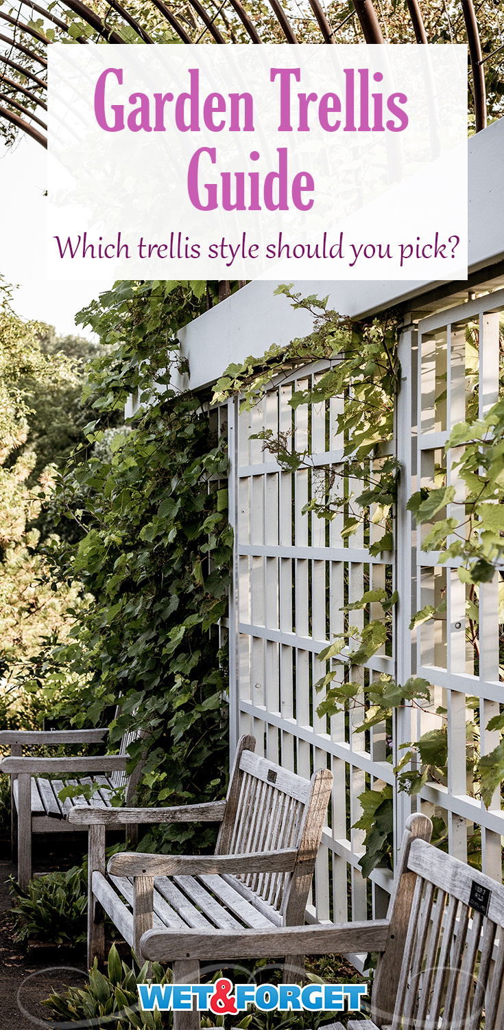 Find out more about the different styles of garden trellis and how you can make your own.