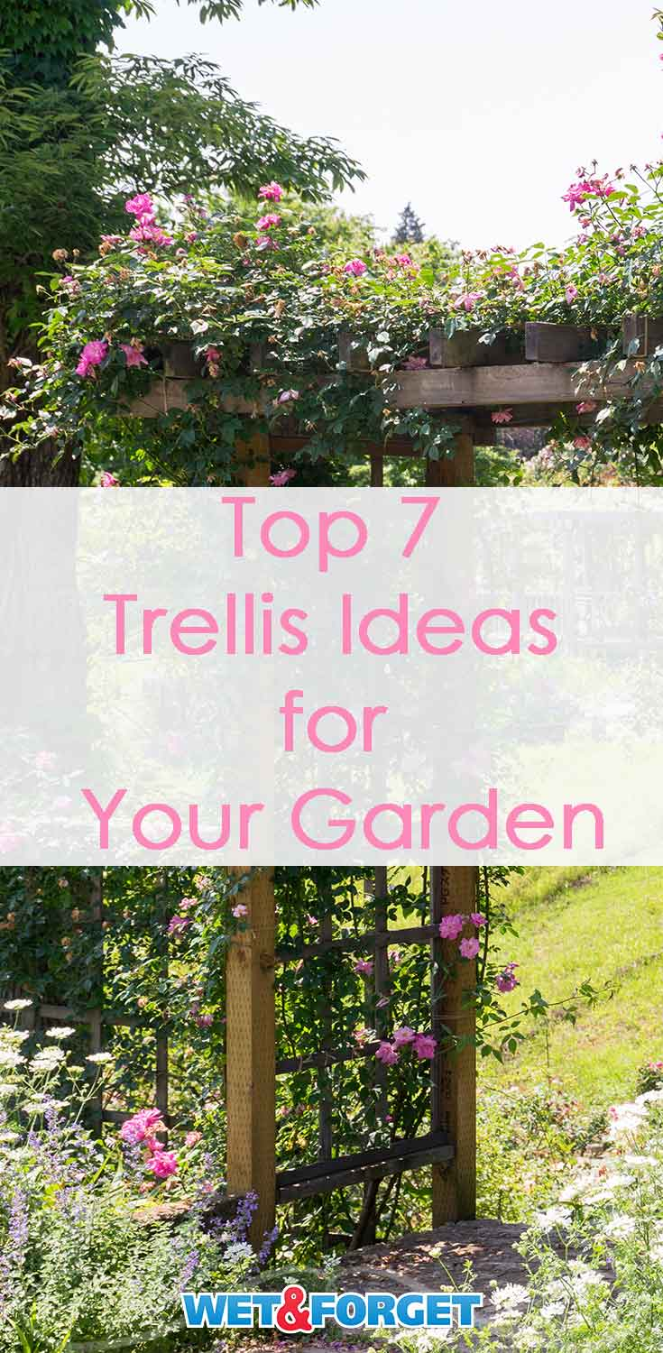 Pick out the best trellis for your garden with our quick guide!