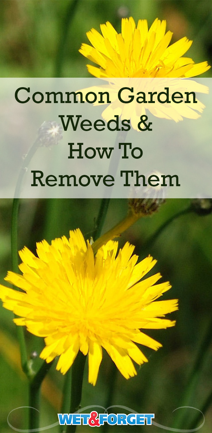 - Get rid of common garden weeds by first identifying them and deciding on the best method to remove them.