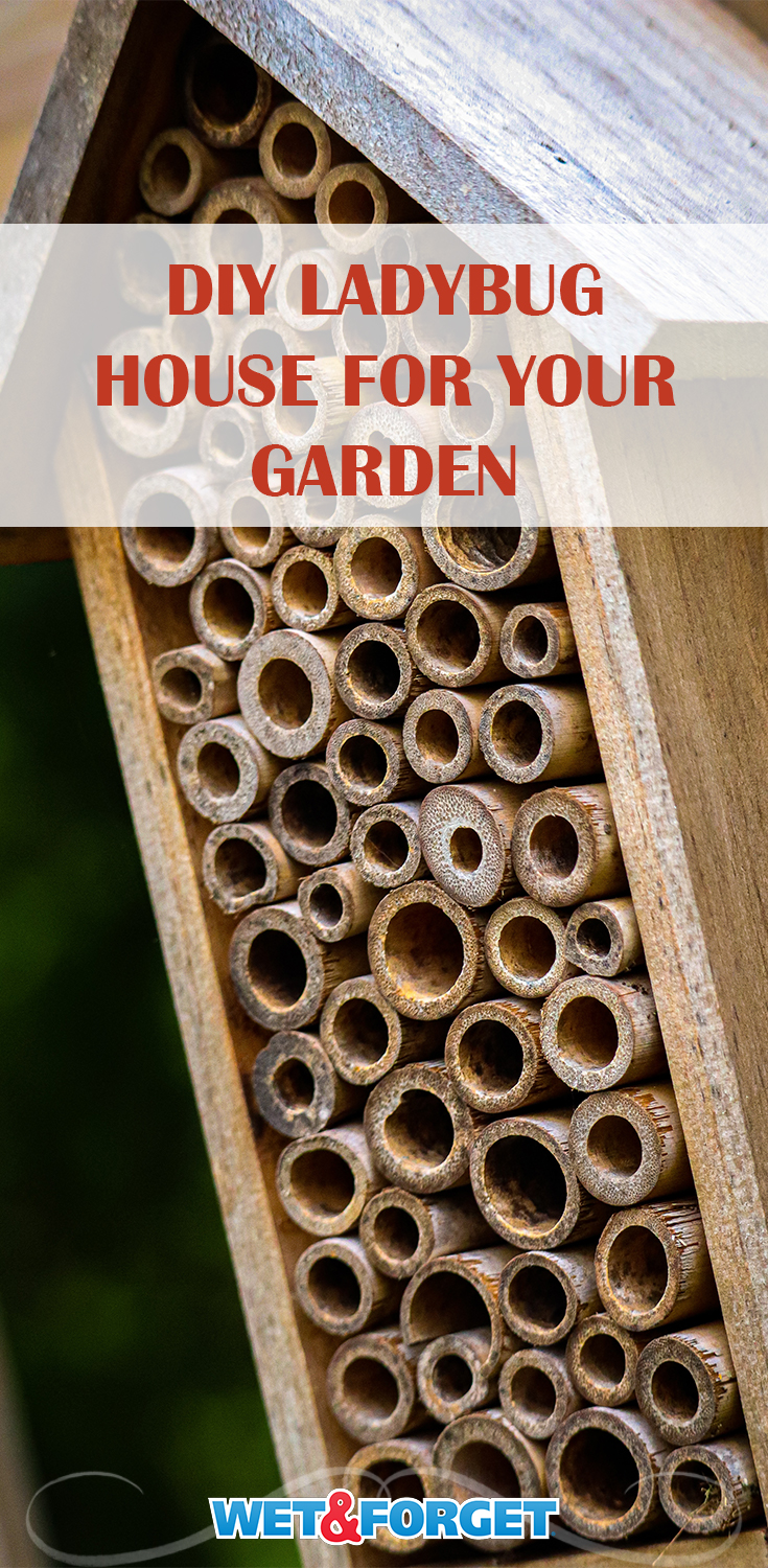 Keep ladybugs around in your garden with this DIY ladybug house!