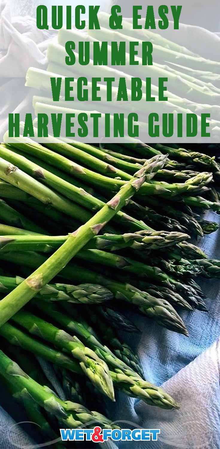 Discover the top harvesting tips for your garden with our guide!